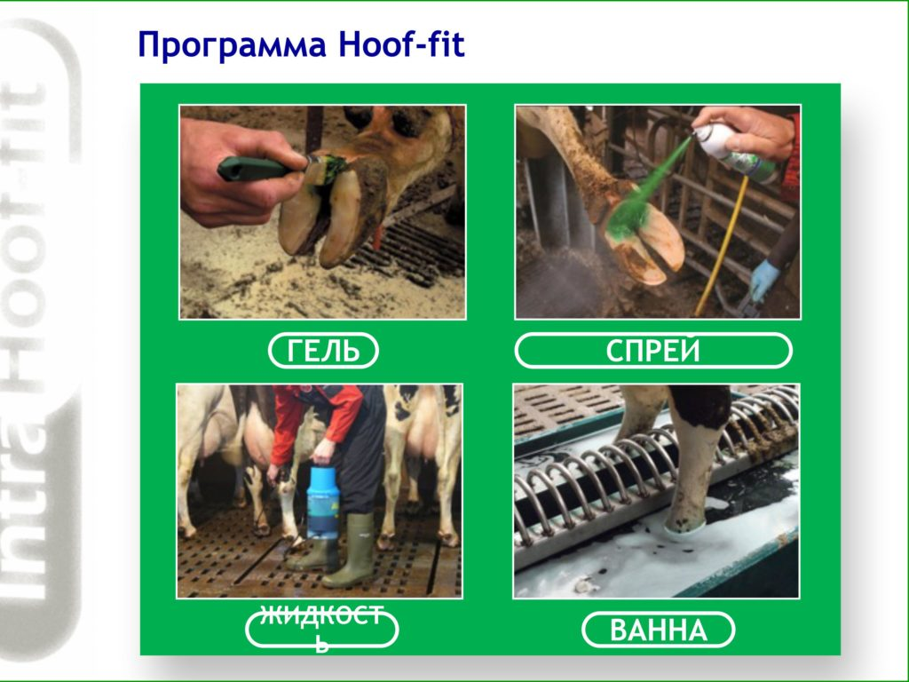 Spray Intra Hoof-fit