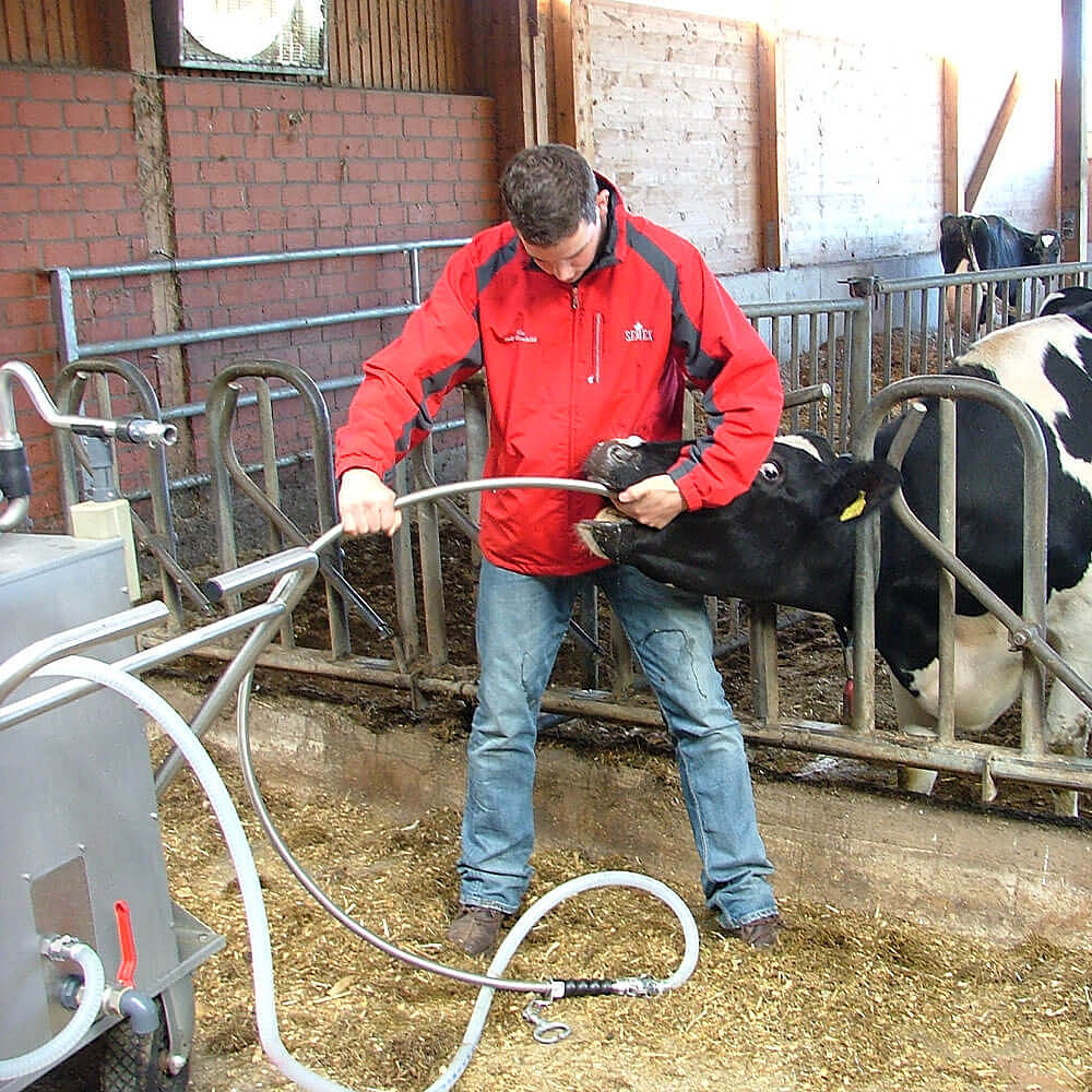 Probe for cows