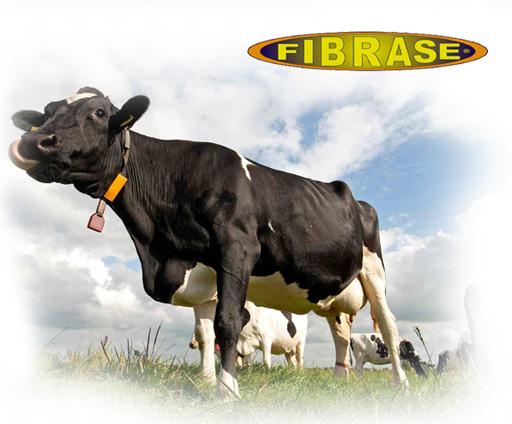 Fibrase