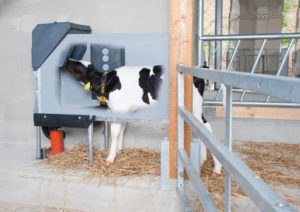 A new standard for evacuation of calves to increase their weight gain