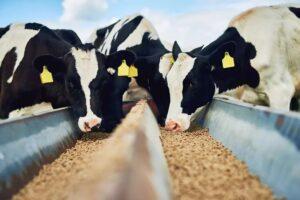 Какой комбикорм лучше выбрать для коров
